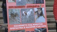 Екозащитници поискаха ефективни присъди срещу зверствата над животни