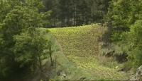 Тютюнопроизводството в симитлийското село Долно Осеново замира
