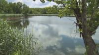 Мъртва риба в езерото в русенското село Щръклево