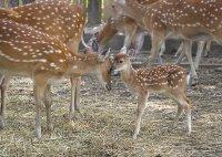 снимка 11 Зоопаркът – вход свободен. Тълпи от хора, подплашени животни