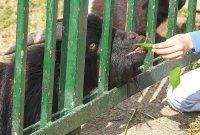 снимка 6 Зоопаркът – вход свободен. Тълпи от хора, подплашени животни