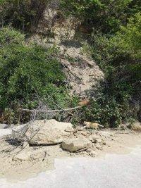 Пръст и скални късове са паднали снощи по алеята на Офицерския плаж във Варна