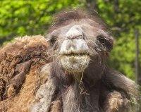 снимка 14 Зоопаркът – вход свободен. Тълпи от хора, подплашени животни