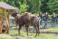 снимка 13 Зоопаркът – вход свободен. Тълпи от хора, подплашени животни