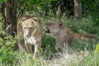 снимка 9 Зоопаркът – вход свободен. Тълпи от хора, подплашени животни
