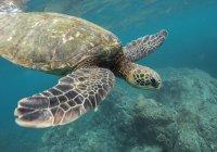 """Световният ден на океаните: """"30х30"""", любопитни факти и как да го отпразнуваме"""