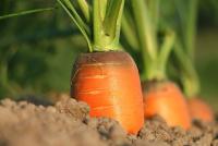 "56 595 земеделски стопани получиха субсидии от ДФ ""Земеделие"""