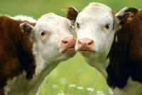 """Започнаха плащанията по мярка 14 """"Хуманно отношение към животните"""""""