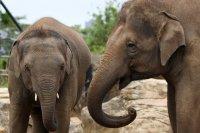 Индиец изуми света, остави наследството си на слонове