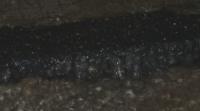 Отнесени автомобили и изровена настилка след пороя в Червен бряг