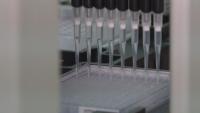 Учени разработиха серум срещу COVID-19 от кръвна плазма на коне