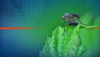 Нашествие от комари във Варна