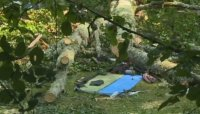 Не е ясно защо е паднало дървото, убило чешката туристка в Рила
