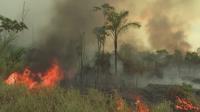 Нови силни покари и обезлесяване в Амазония