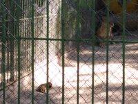 Двe лъвчета се родиха в зоопарка в Благоевград, но дали ще оцелеят?