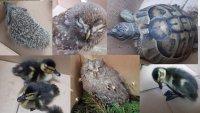 Спасиха пет екземпляра от защитени видове