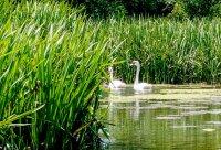 снимка 9 С каяк и водно колело по река Златна Панега (СНИМКИ)