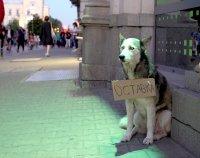снимка 7 Лозунгите на протеста в София (Галерия)