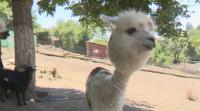 Семейство се грижи за 150 животни в двора си в Пернишко
