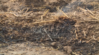 Увеличава се броят на пожарите заради сушата в Русенска област