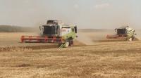 С рекордно ниски добиви приключи жътвата в Добричко