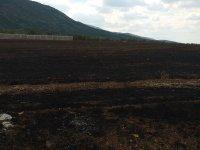 снимка 3 Нов пожар на изхода на Асеновград, огънят вече е потушен