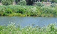 В деня, в който крави се отровиха на водопой – семейство се къпало в Марица