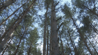 9 души са задържани за незаконен добив на дървесина