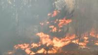 Няма опасност пожарът край Свиленград да се разпространи към други населени места