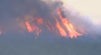 Потушен е пожарът в Странджа - Сакар планина