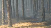 Пожарът край Свиленград е локализиран, но още има незагасени огнища