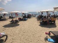 снимка 2 Чироз замени семките на плажа в Слънчев бряг (Снимки)