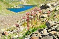 снимка 11 Магията на Седемте рилски езера (ГАЛЕРИЯ)