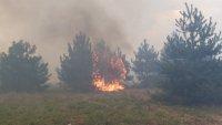 Пожарът в боровата гора над Карлово се разраства