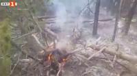 Пожар в иглолистна гора край Девин