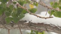 Зимата дойде в Колорадо
