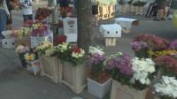 Спад на търсенето на цветя след призив да не се подаряват на първия учебен ден