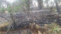 Големият пожар край Девин е ликвидиран, но остава под наблюдение и тази нощ
