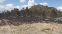 Ограничен е големият пожар край Девин, продължава гасенето на отделни малки огнища