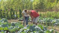 Младежи със специфични проблеми намериха работа в зеленчукова градина