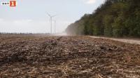 Масово съхнене на полезащитните горски пояси в Добруджа