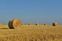 Предвиждат обезщетения de minimis за земеделските стопани заради сушата