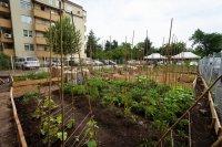 Как може да отглеждаме сами плодове и зеленчуци в града