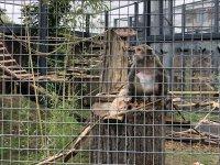 Маймуните от Столичния зоопарк се нанесоха в обновения сектор
