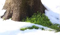 Първи сняг в планините - какви са условията за туризъм?