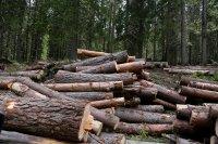 Дърводобивни фирми настояват за помощ от държавата заради коронавируса