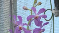 Мъж от Варна създаде първата на Балканите оранжерия за екзотични орхидеи