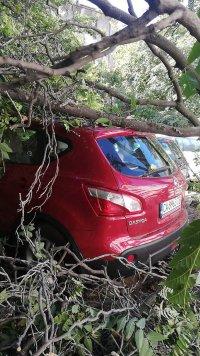 снимка 2 Дърво падна зад жилищен блок в Пловдив, нанесени са щети по автомобили