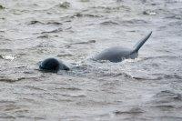 Нова операция по спасяване на китове край Нова Зеландия