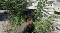 снимка 4 Дърво падна зад жилищен блок в Пловдив, нанесени са щети по автомобили